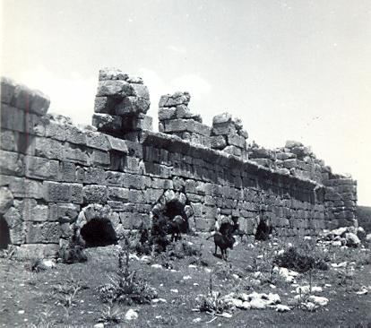 black and white photograph of donkeys in front of a ruined wall