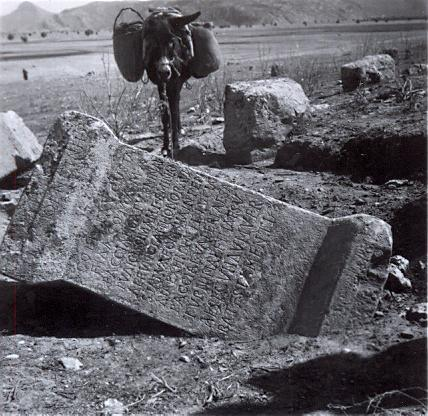 black and white photograph of a donkey in front of a fallen stone with a Greek inscription