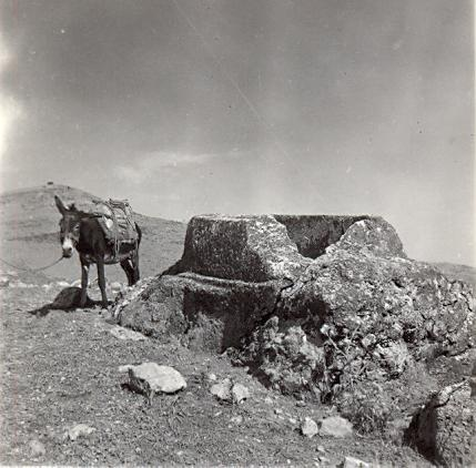 black and white photograph of a donkey next ot an archaeological feature