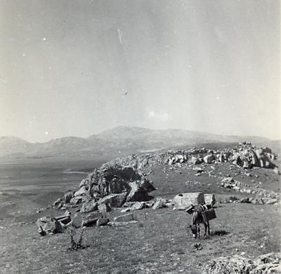 black and white photograph of a donkey grazing in an archaeological landscape with mountains