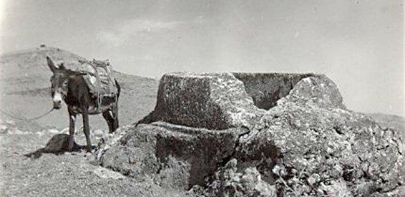 black and white photograph of a donkey standing next to a an archaeological feature